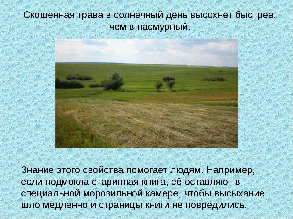 Скошенная трава в солнечный день высохнет быстрее, чем в пасмурный. Знание эт...