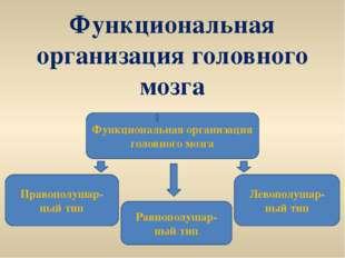Функциональная организация головного мозга Функциональная организация головно