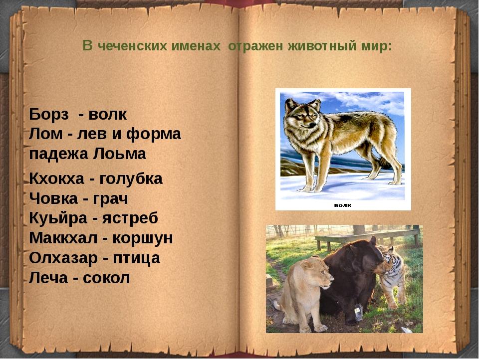 В чеченских именах отражен животный мир:  Борз - волк Лом- лев и форма...