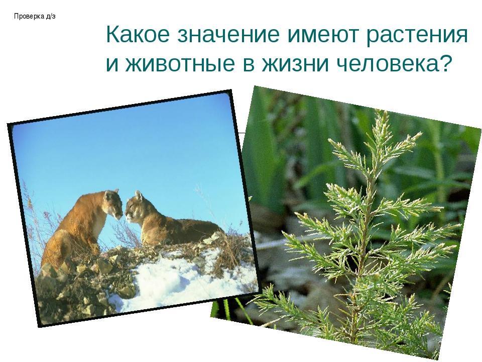 Какое значение имеют растения и животные в жизни человека? Проверка д/з