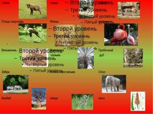 Гиена страус носорог Птица-секретарь Фенек фламинго Вельвичия Зонтичная пальм