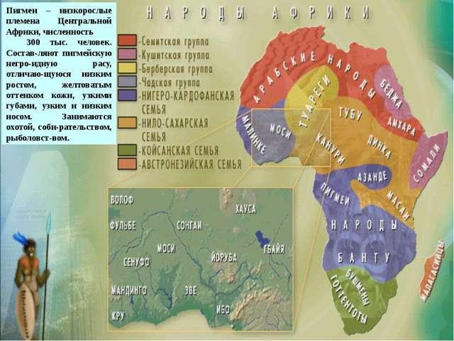 пигмеи Пигмеи – низкорослые племена Центральной Африки, численность 300 тыс....