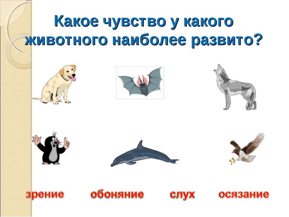 Какое чувство у какого животного наиболее развито?
