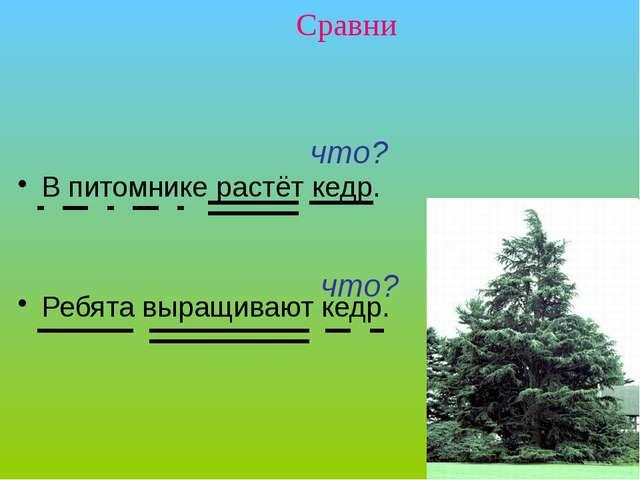 В питомнике растёт кедр. Ребята выращивают кедр. Сравни что? что? Упражнение...
