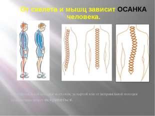 От скелета и мышц зависит ОСАНКА человека. От неправильной посадки за столом,