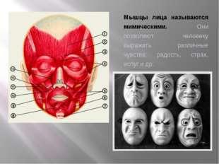 Мышцы лица называются мимическими. Они позволяют человеку выражать различные