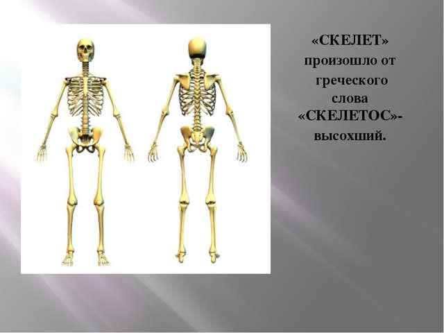 «СКЕЛЕТ» произошло от греческого слова «СКЕЛЕТОС»- высохший.