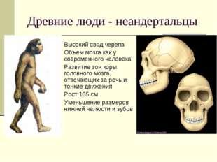 Древние люди - неандертальцы Высокий свод черепа Объем мозга как у современно