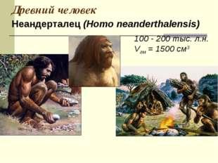 Древний человек 100 - 200 тыс. л.н. Vгм = 1500 см3 Неандерталец (Homo neander