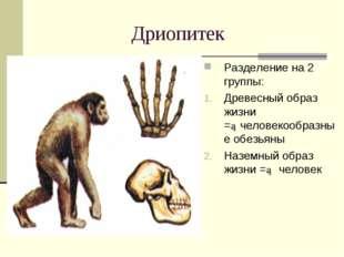 Дриопитек Разделение на 2 группы: Древесный образ жизни =►человекообразные об