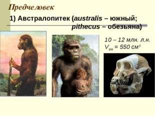Предчеловек 1) Австралопитек (australis – южный; pithecus – обезьяна) 10 – 12