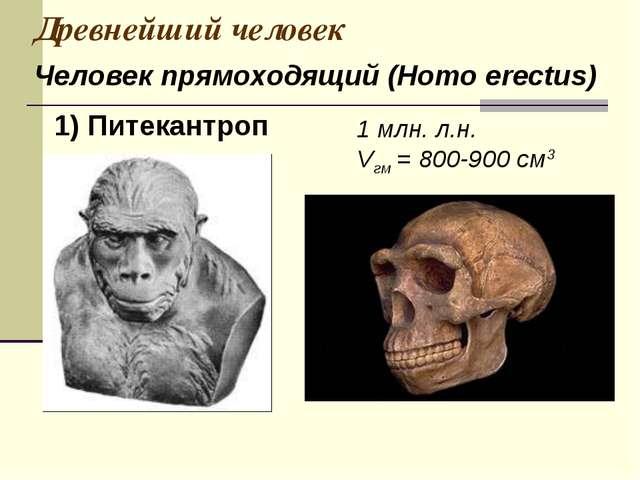 Древнейший человек 1 млн. л.н. Vгм = 800-900 см3 Человек прямоходящий (Homo e...