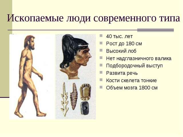 Ископаемые люди современного типа 40 тыс. лет Рост до 180 см Высокий лоб Нет...