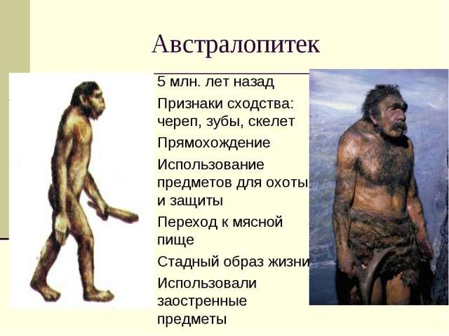 Австралопитек 5 млн. лет назад Признаки сходства: череп, зубы, скелет Прямохо...