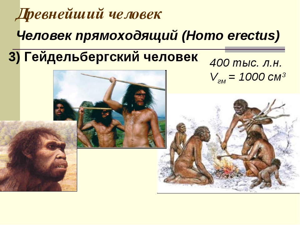 Древнейший человек 400 тыс. л.н. Vгм = 1000 см3 Человек прямоходящий (Homo er...