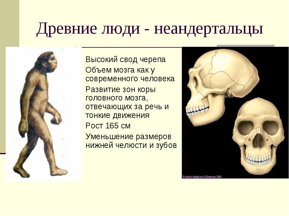 Древние люди - неандертальцы Высокий свод черепа Объем мозга как у современно...