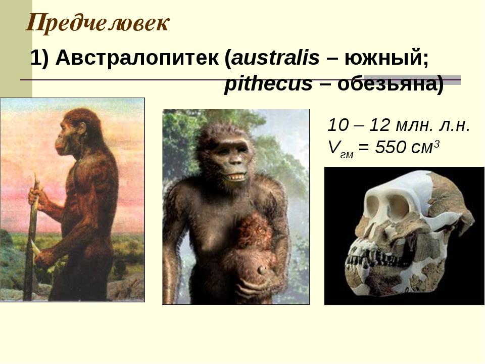 Предчеловек 1) Австралопитек (australis – южный; pithecus – обезьяна) 10 – 12...