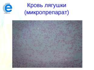 Кровь лягушки (микропрепарат)