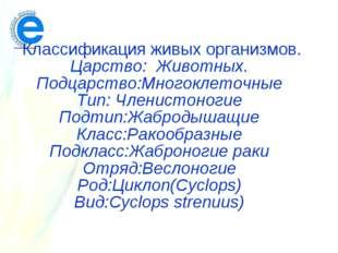 Классификация живых организмов. Царство: Животных. Подцарство:Многоклеточные