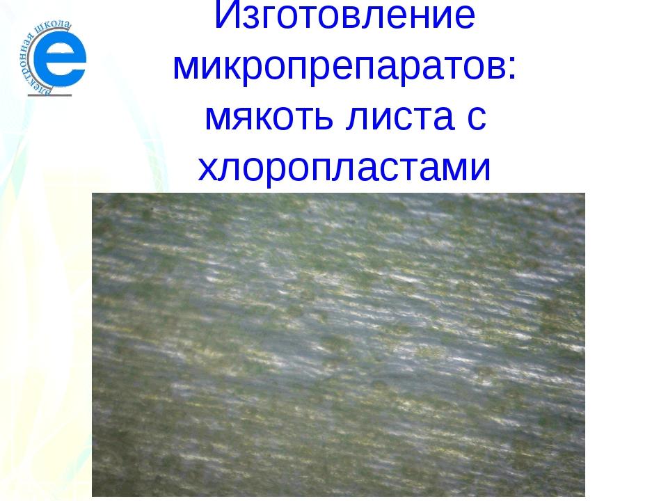 Изготовление микропрепаратов: мякоть листа с хлоропластами