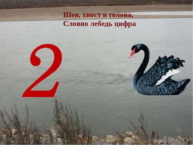 2 Шея, хвост и голова, Словно лебедь цифра