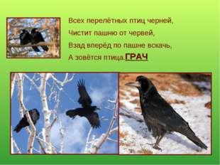 Всех перелётных птиц черней, Чистит пашню от червей, Взад вперёд по пашне вск