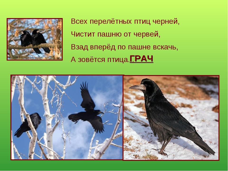 Всех перелётных птиц черней, Чистит пашню от червей, Взад вперёд по пашне вск...