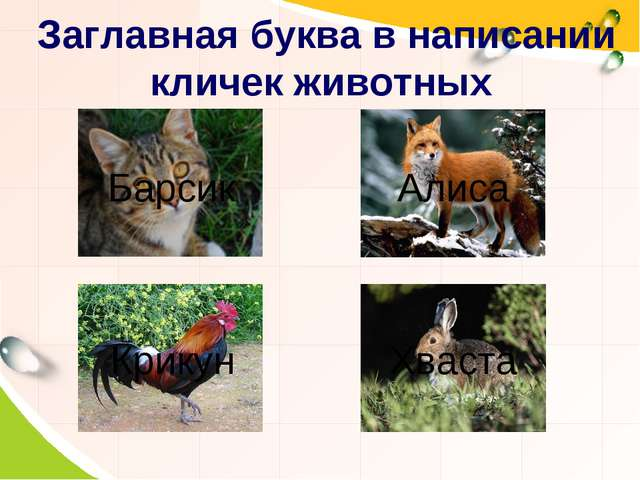 Заглавная буква в написании кличек животных Барсик Алиса Хваста Крикун