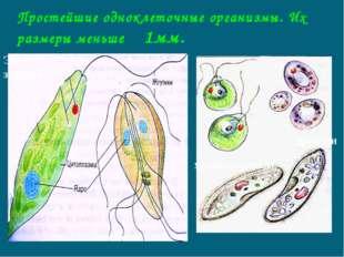 Простейшие одноклеточные организмы. Их размеры меньше 1мм. Эвглена зелёная ля