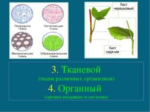 3. Тканевой (ткани различных организмов) 4. Органный (органы входящие в систе