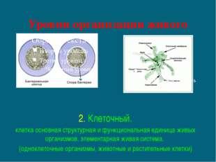 Уровни организации живого 2. Клеточный. клетка основная структурная и функцио