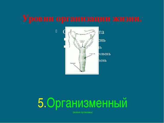 Уровни организации жизни. 5.Организменный (живые организмы)