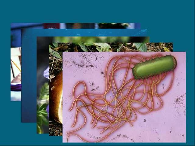 Учёные насчитывают более 3,5 млн видов живых организмов представляющих собой...