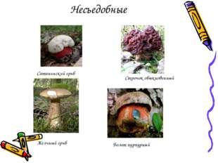 Несъедобные Сатанинский гриб Строчок обыкновенный Желчный гриб Болет пурпурный