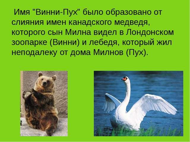 """Имя """"Винни-Пух"""" было образовано от слияния имен канадского медведя, которого..."""