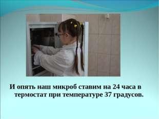 И опять наш микроб ставим на 24 часа в термостат при температуре 37 градусов.