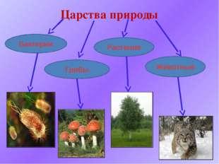 Царства природы Бактерии Грибы Растения Животные