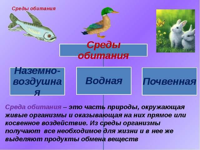 Среда обитания – это часть природы, окружающая живые организмы и оказывающая...