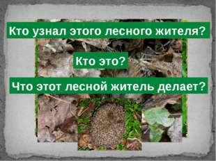 Кто узнал этого лесного жителя? Что этот лесной житель делает? Кто это?