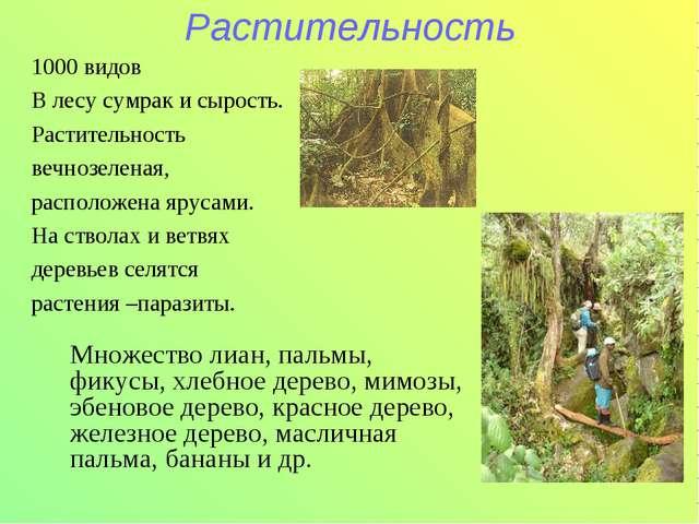 Растительность 1000 видов В лесу сумрак и сырость. Растительность вечнозелена...