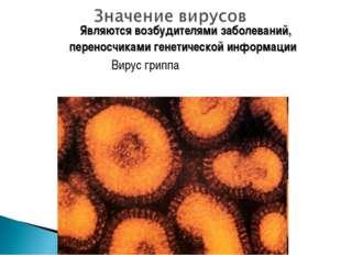 Являются возбудителями заболеваний, переносчиками генетической информации Ви
