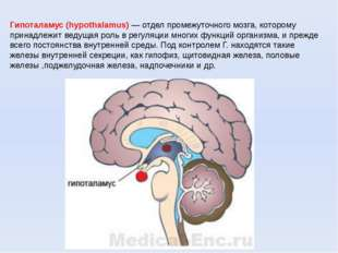Гипоталамус (hypothalamus) — отдел промежуточного мозга, которому принадлежит