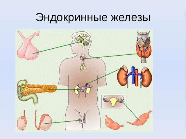 Эндокринные железы
