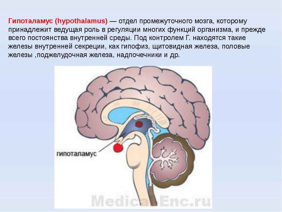 Гипоталамус (hypothalamus) — отдел промежуточного мозга, которому принадлежит...