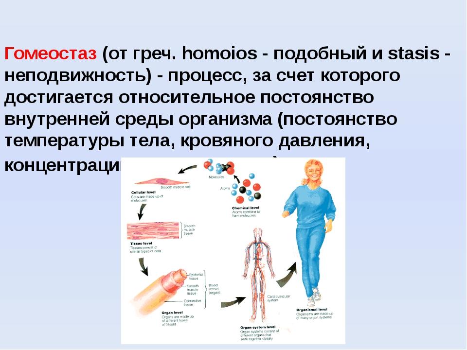 Гомеостаз (от греч. homoios - подобный и stasis - неподвижность) - процесс, з...