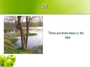 BY There are three trees by the lake