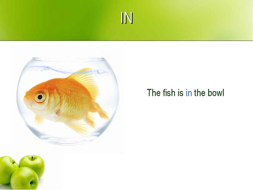 IN The fish is in the bowl