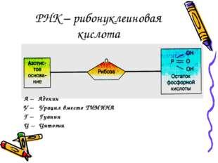 РНК – рибонуклеиновая кислота А – Аденин У – Урацил вместо ТИМИНА Г – Гуанин