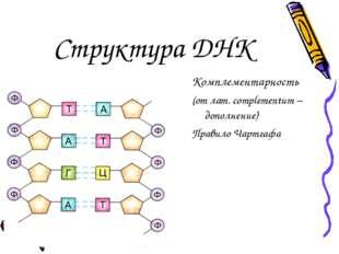 Структура ДНК Комплементарность (от лат. complementum – дополнение) Правило Ч