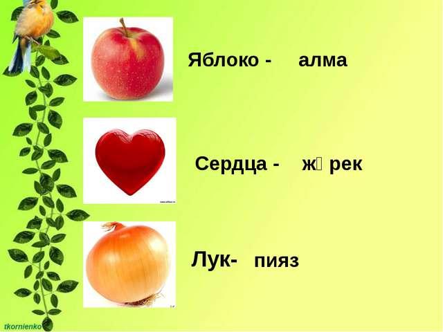 Лук- Яблоко - Сердца - алма жүрек пияз